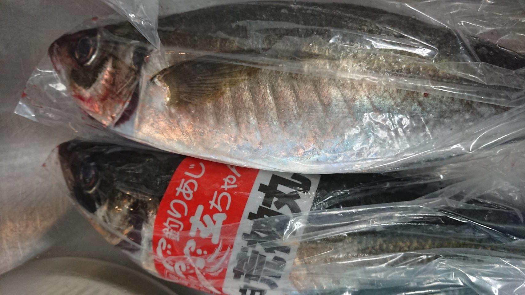 海道_20190509_釣り鯵
