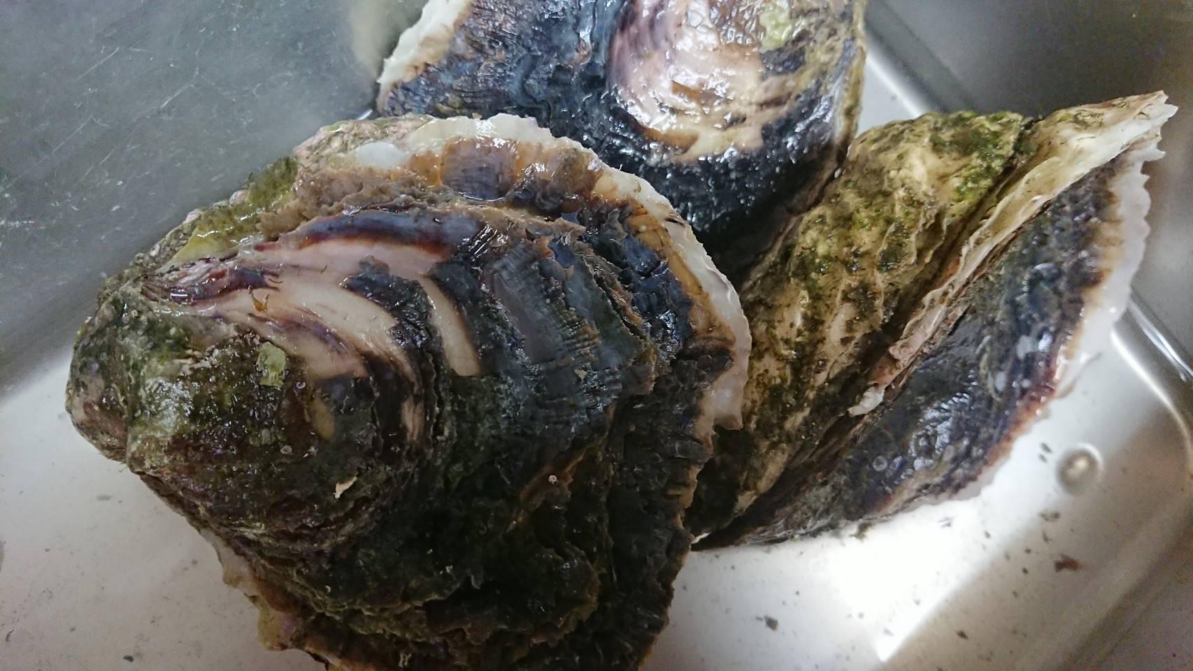 海道_20190516_岩牡蠣